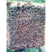 Bees & Queens